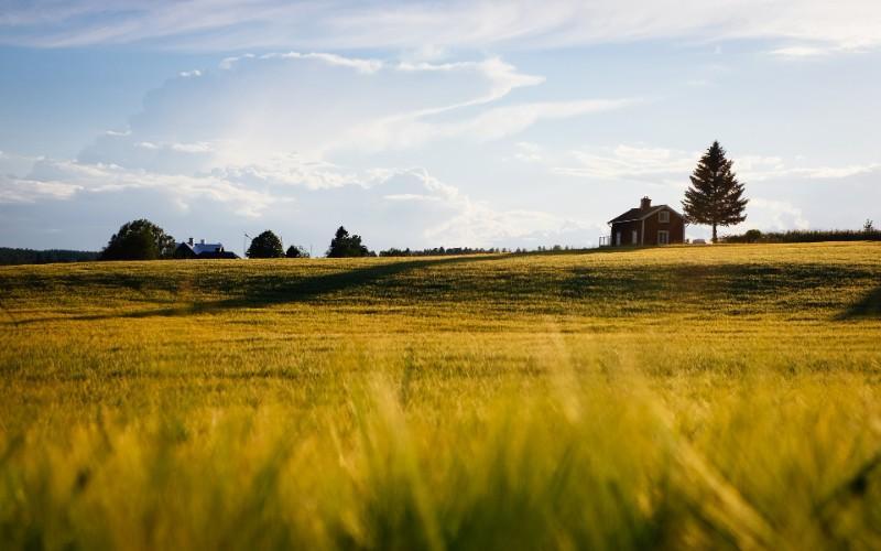 maison et champs
